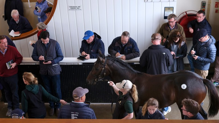 Most horses destined to race on the Flat are sold as yearlings