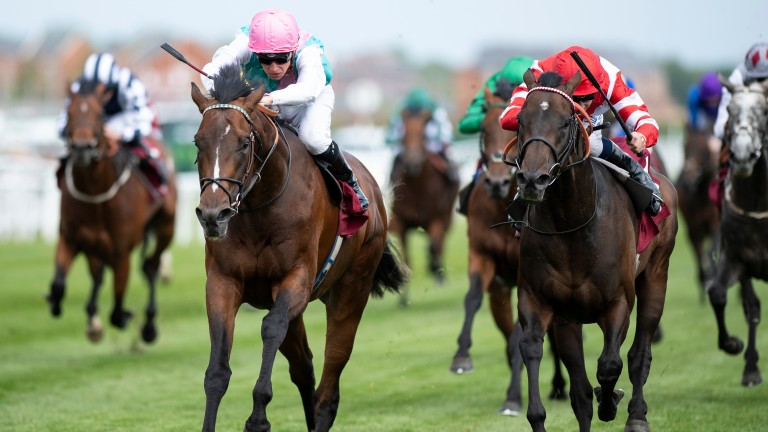 Headman: was among the entries for the Prince of Wales's Stakes