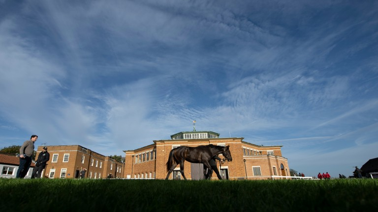 Tattersalls: wildcard entries have been added to the Guineas Breeze-Up and Horses in Training Sale