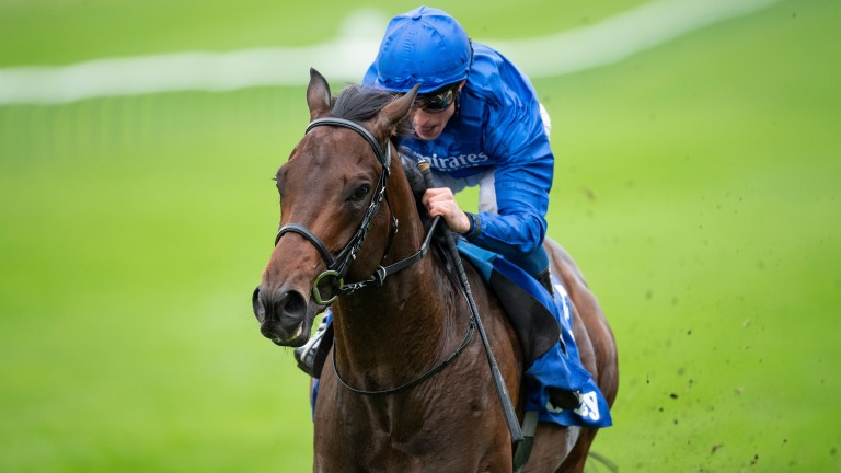 Pinatubo: it won't be long now until we get another glimpse of the unbeaten juvenile, who is a hot favourite for the Qipco 2,000 Guineas