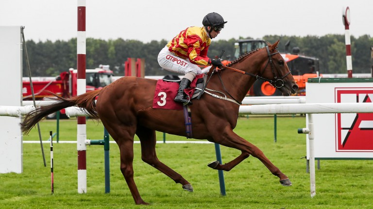 Sir Ron Priestley: has not raced since finishing behind Logician in the 2019 St Leger