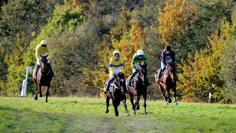 Irish point-to-pointing has been suspended