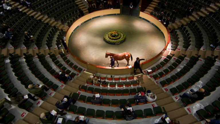 The Goffs November Breeding-Stock Sale will be sandwiched by foal trade