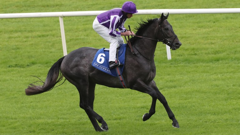 Hong Kong, pictured earlier in the season, has a stallion's pedigree