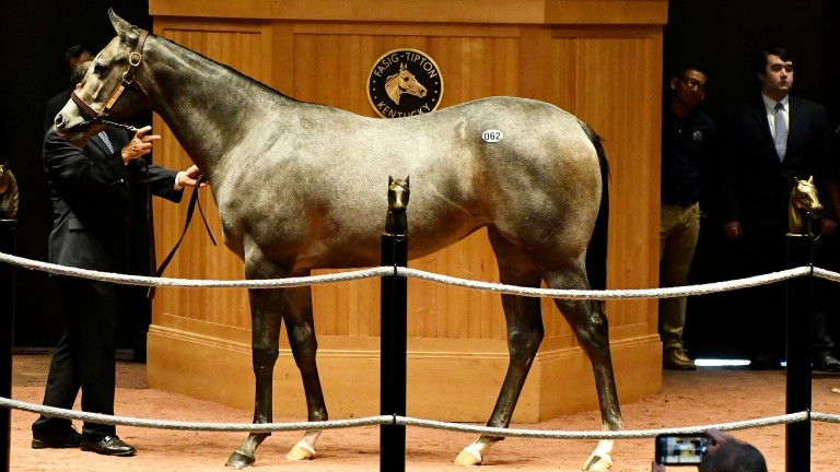 The session-topping Medaglia D'Oro filly sold for $400,000
