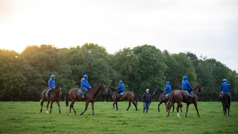 Colin Tizzard organises first lot on the gallops at Venn Farm