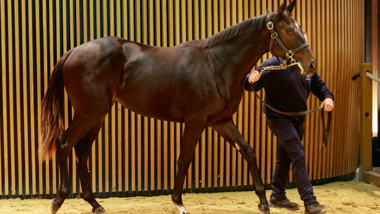 Wootton Bassett filly sold by Haras d'Etreham for €135,000 at Arqana on Wednesday