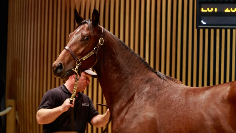 Wootton Bassett colt sold by Haras des Sablonnets for €200,000 at Arqana on Wednesday