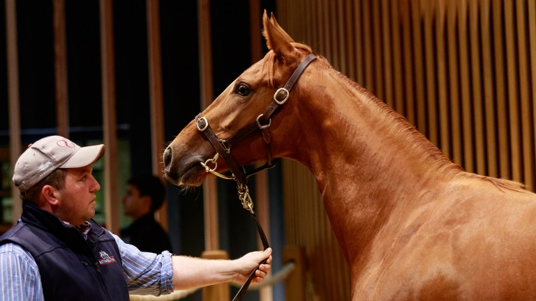 A filly yearling by Territories was sold by JK Thoroughbreds for €260,000 at Arqana on Wednesday