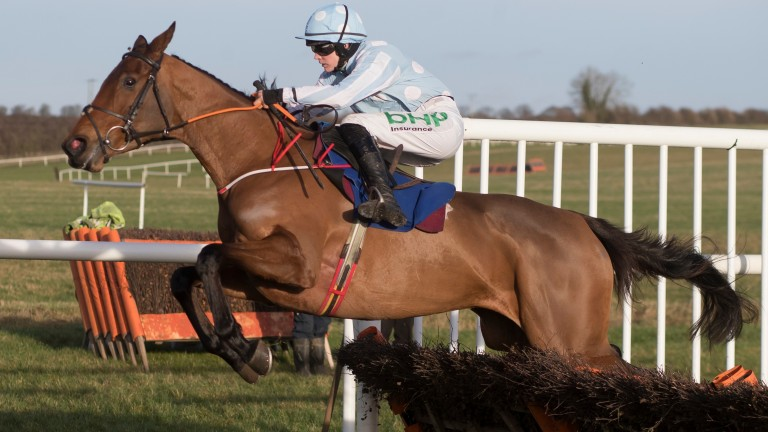Honeysuckle: set to face four rivals in the opening race at Fairyhouse