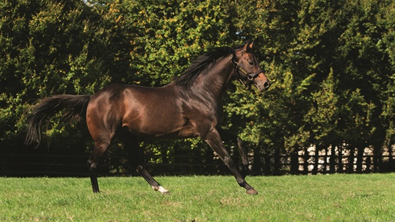 Masterstroke has been secured by Yorton Farm