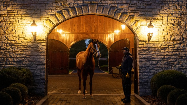 Justify: one of many stallions featured in the online trail