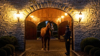 Justify: covered 252 mares in 2019