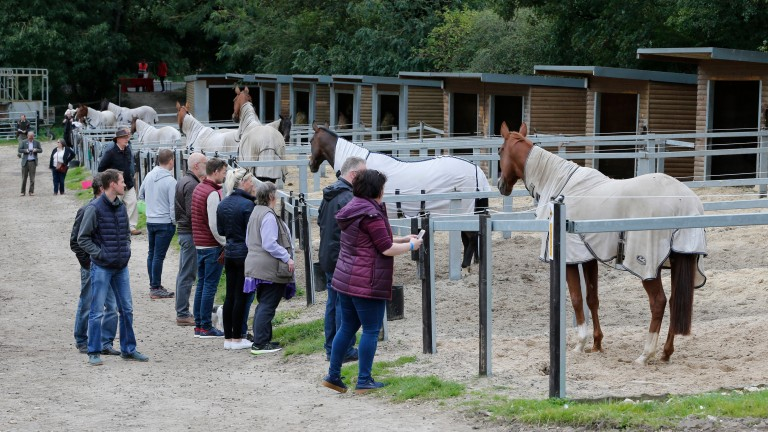 The horses prove popular at an open day at Brian Ellison's yard