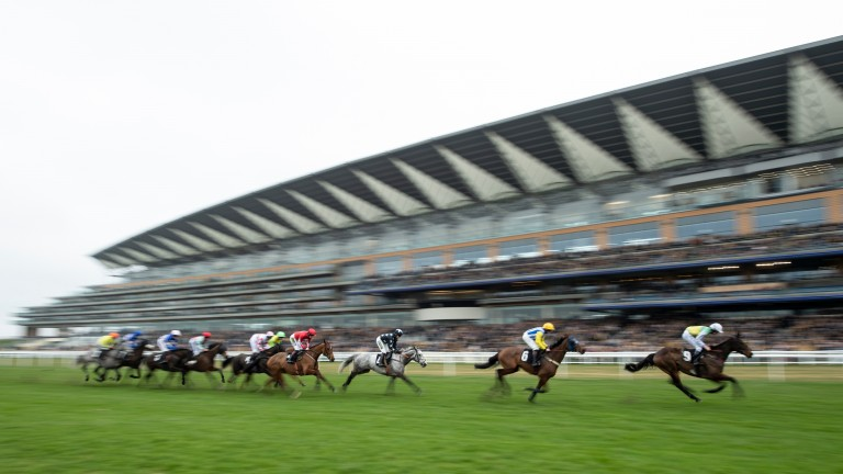 Ascot: could welcome north of 14,000 racegoers on Saturday