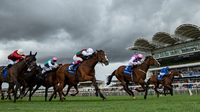 The Quadpot requires you to find a horse to place in four selected races