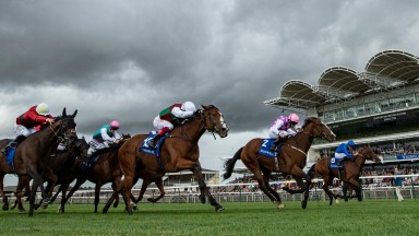 She's Got You (centre) is just denied at Newmarket 27.9.19 Pic: Edward Whitaker
