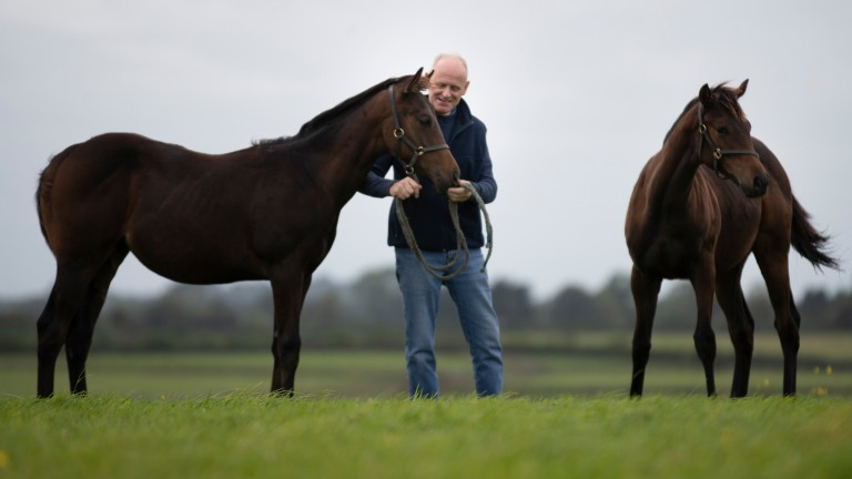 A total of 13,443 foal births have been registered in Britain and Ireland in 2019