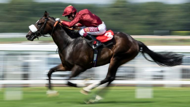 Kameko: kept up a relentless gallop towards the line in the Vertem Futurity