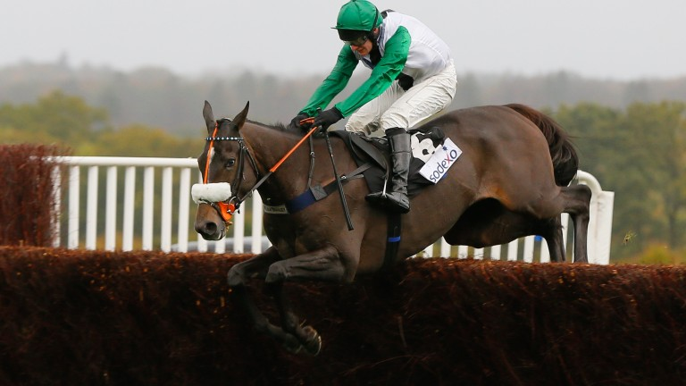 Vinndication on his way to victory in the Sodexo Gold Cup