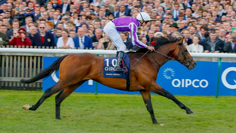 Guineas winner Magna Grecia is now a Coolmore sire