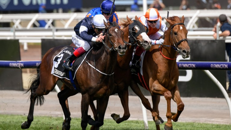 Master Of Reality (left) squeezes up Il Paradiso and Vow And Declare (right) in the latter stages of Tuesday's Melbourne Cup