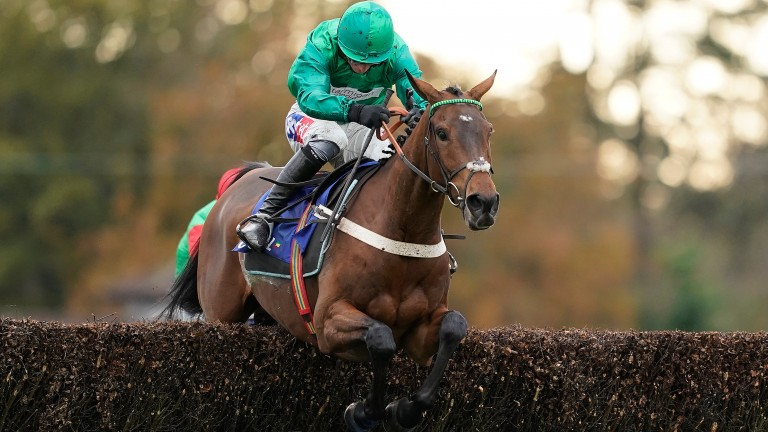 Janika: trying hurdles for the first time in Britain at Cheltenham
