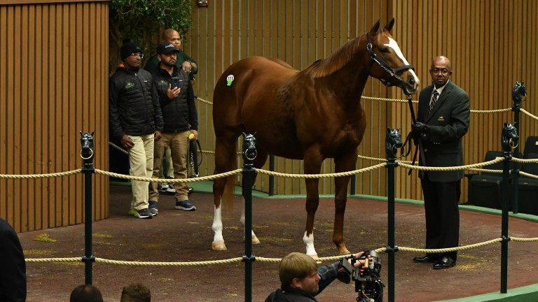 Take Charge Brandi was the centre of attention as hip 111