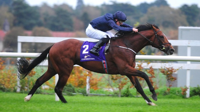 Flag Of Honour: joining the National Stud in 2020
