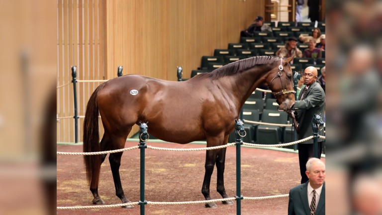Conquest Eclipse: Grade 1-placed mare sold in foal to Justify for $650,000