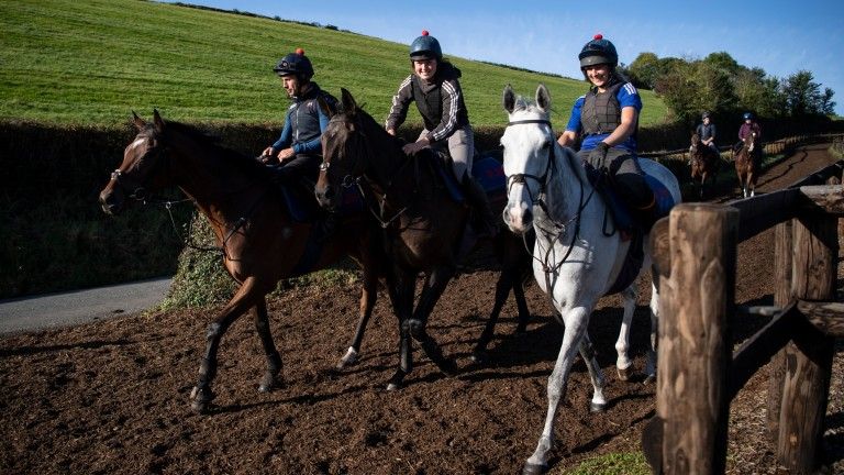 In good company: Brother Tedd (right) alongside Smarty Wild (middle) and five-time Grade 1 winner Defi Du Seuil (left)