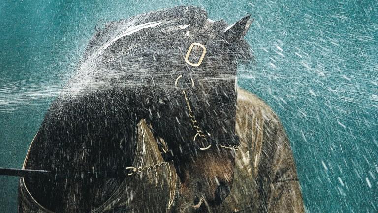 Danehill enjoying a shower at Coolmore in 2003