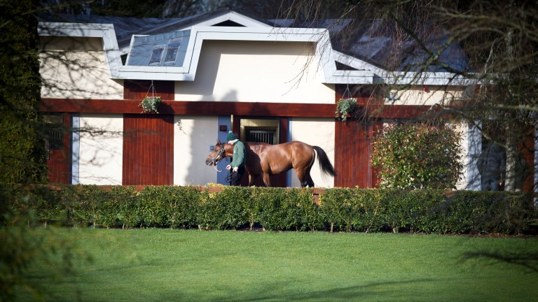 Irish National Stud: will welcome 27 new students in January