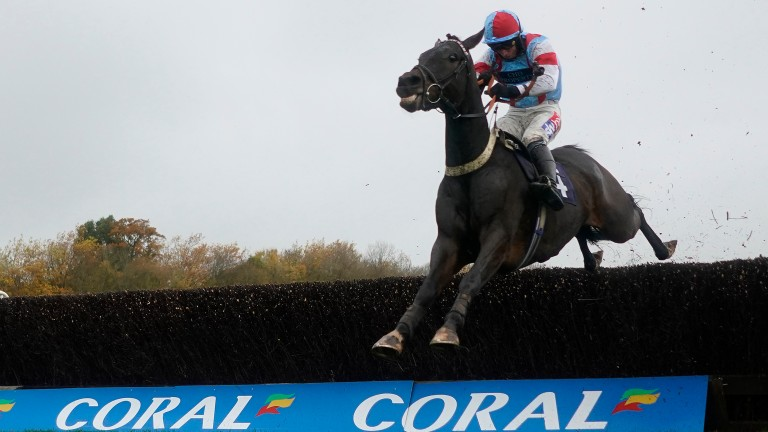Simply The Betts: second to Commanche Red at Kempton