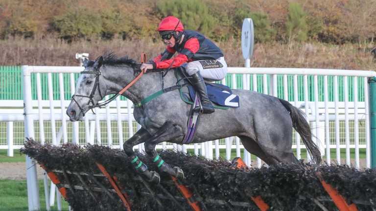 Desaray Girl: bidding to win her first race for trainer Micky Hammond