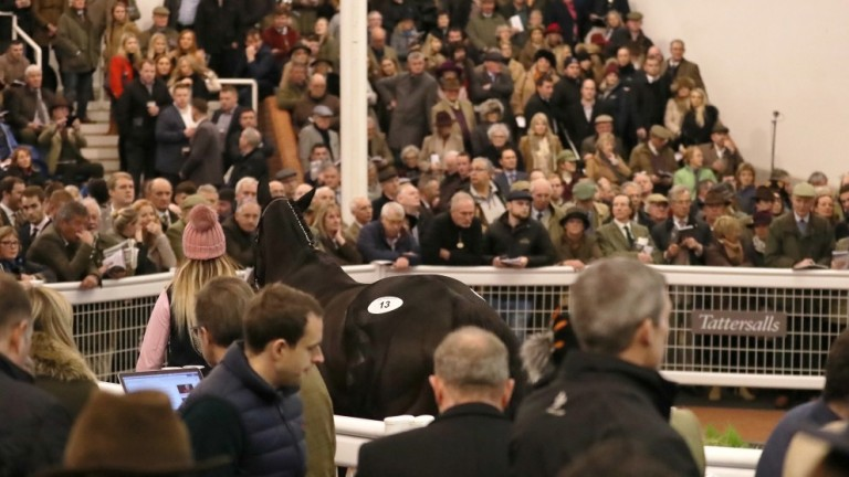 The January event will take the Tattersalls Cheltenham fixtures to seven