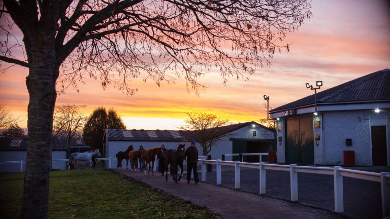 Tattersalls Ireland sales are included in the publication