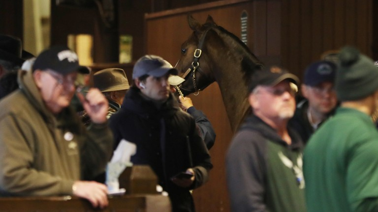 Keeneland has sold 2,543 lots for receipts of $199m this November