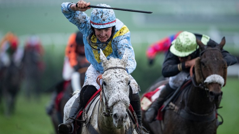 French winner: Diesel D'Allier was successful in last month's cross-country race at Cheltenham