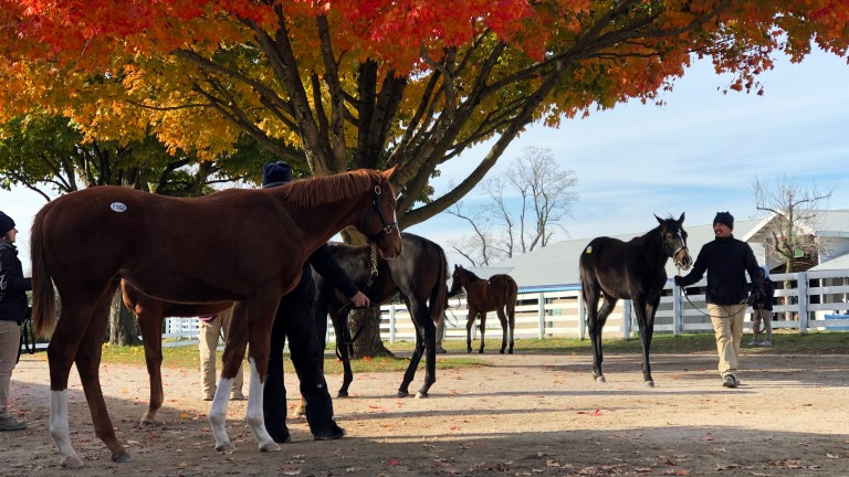 Keeneland: the November Breeding Stock Sale takes place this week