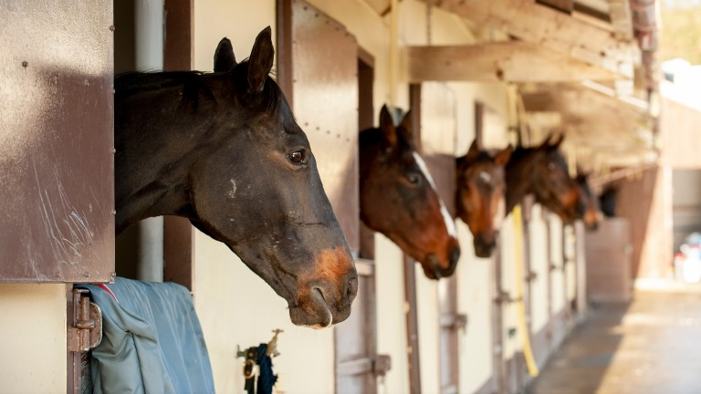 Happy horses look out from their boxes at trainer Peter Bowen's Yet-Y-Rhug Stables