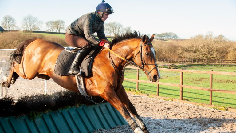 Lord Napier schools under Sean Bowen as he is prepared to run at Newbury this month