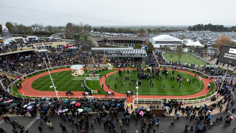 Cheltenham: features five of the six races in the Scoop6