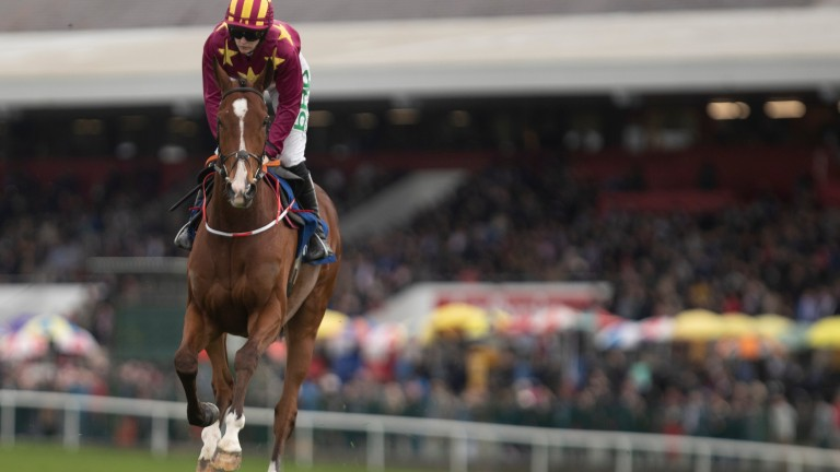 Monalee: poised to go straight to Cheltenham in March