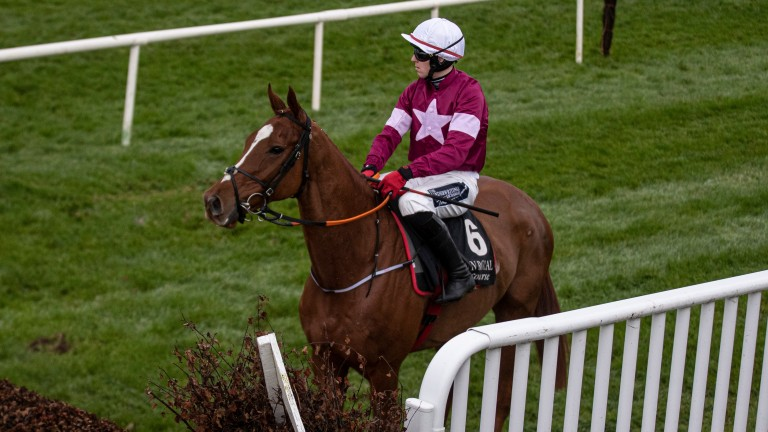 Samcro: disappointed in the Galway Plate