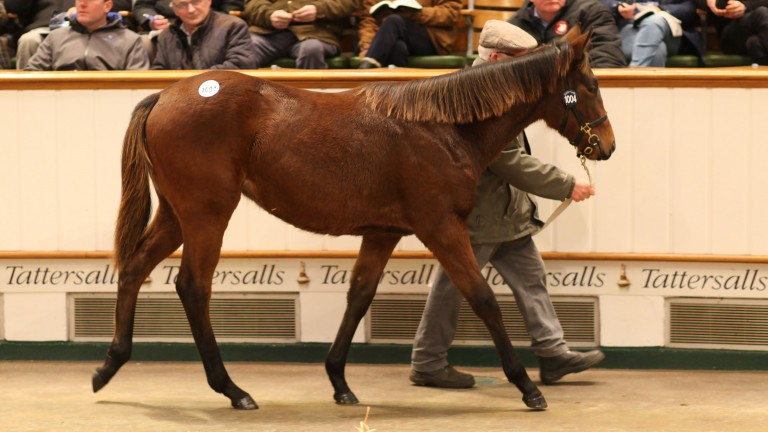 The Invincible Spirit filly out of Liscune brings 440,000gns from Woodford Thoroughbreds