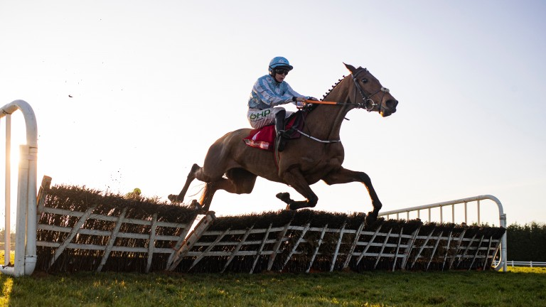 Honeysuckle: set for the Hatton's Grace Hurdle at Fairyhouse later this month