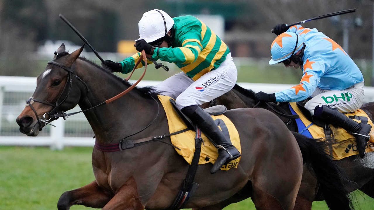Tingle creek bettingadvice king sport betting