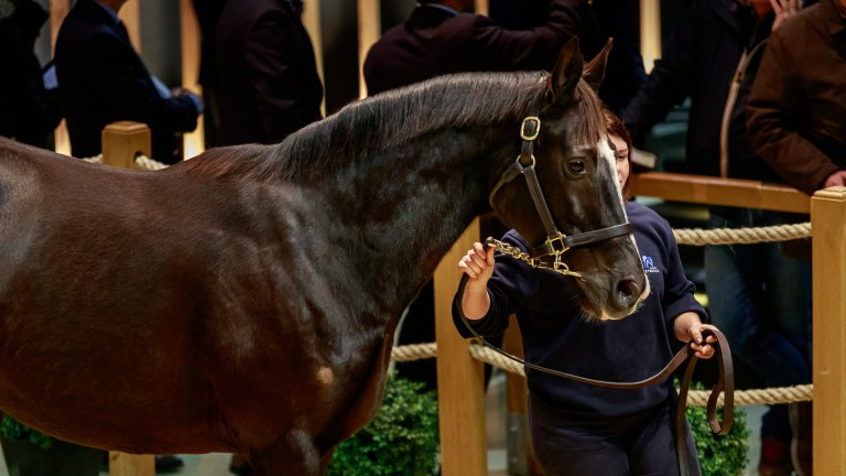 Unaided under the lights in the Arqana ring