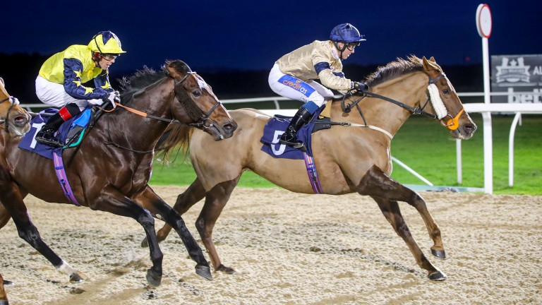 WATCHABLE (Shane Gray) wins at NEWCASTLE 21/11/19Photograph by Grossick Racing Photography 0771 046 1723